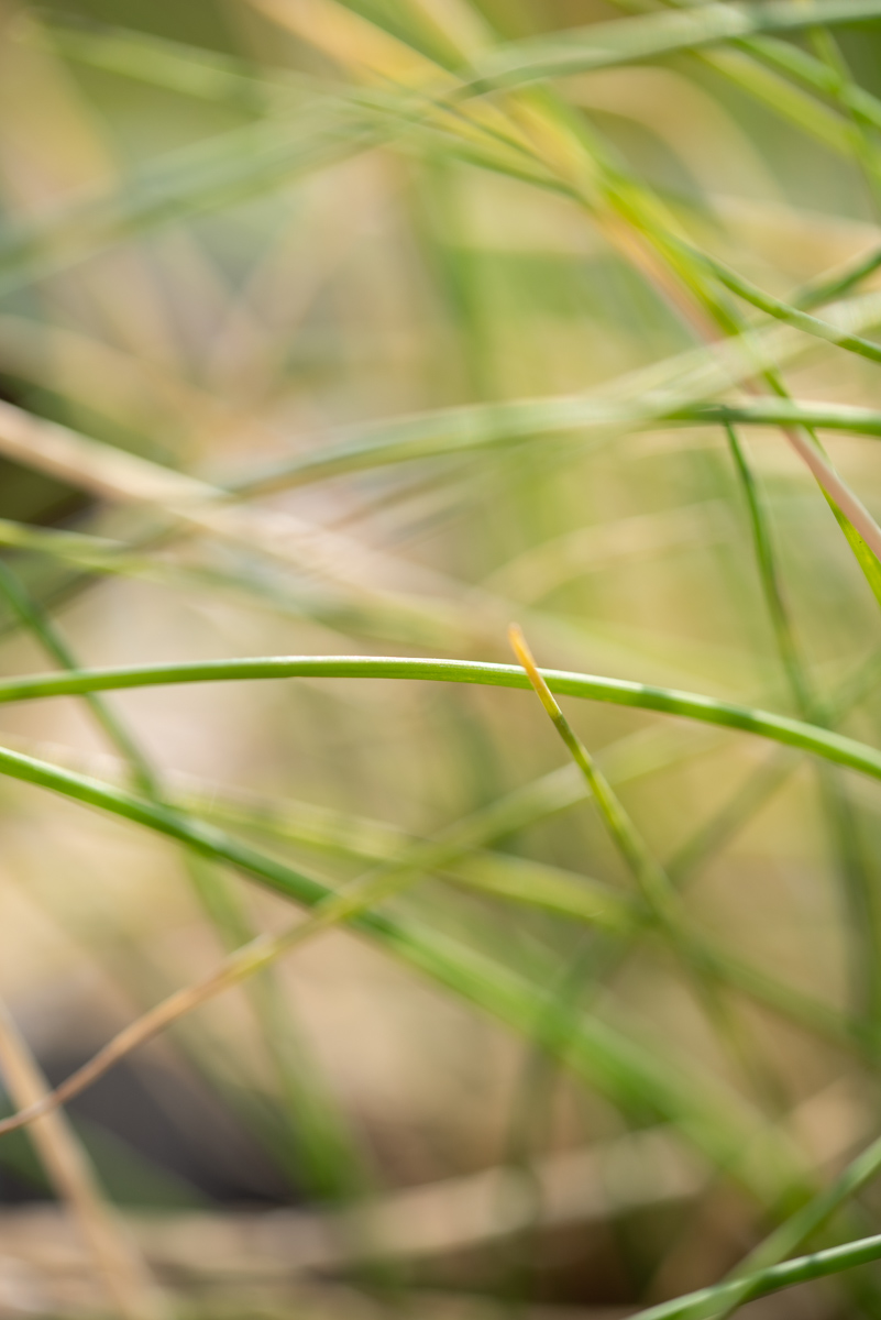 Mes plantes aromatiques : ciboulette
